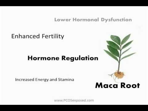{VIDEO} What Are The Best Herbs For PCOS?